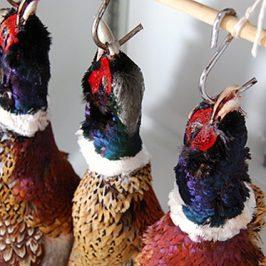 On Hanging Pheasants